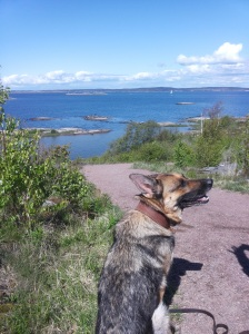 Sillvik View