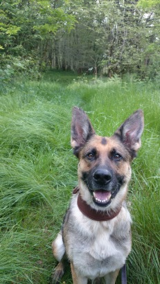 My dog smiling in Chaux Forest