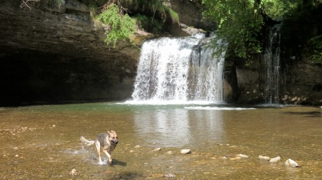Herisson waterfall : fish-dog