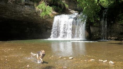 Herisson waterfall : fish-dog