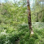 Herisson forest
